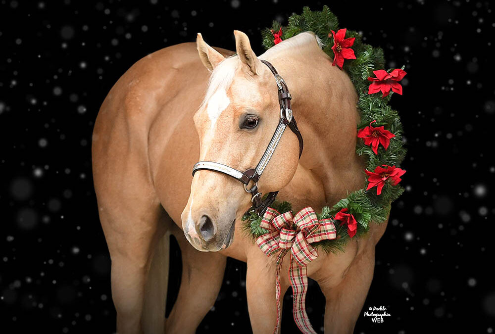 Winter wreath sessions add holiday cheer